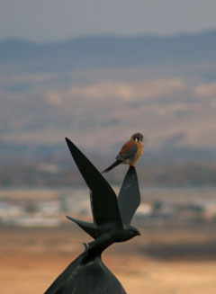 kestrel on sculpture