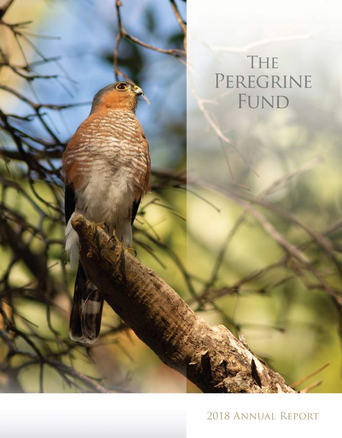 Financial Information | The Peregrine Fund