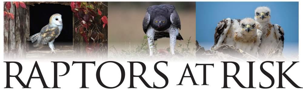 Harpy Eagle (Harpia harpyja) in Explore Raptors: Facts