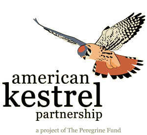 American Kestrel Partnership logo