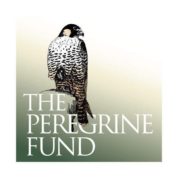 California Condor Restoration The Peregrine Fund