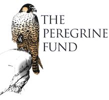 The Peregrine Fund logo