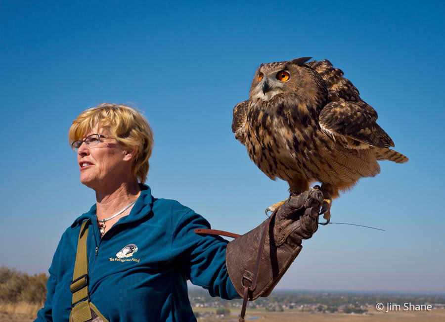 Eurasian Eagle-owl (Bubo bubo) in Explore Raptors: Facts, habitat ...